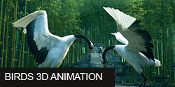 Birds 3d animation